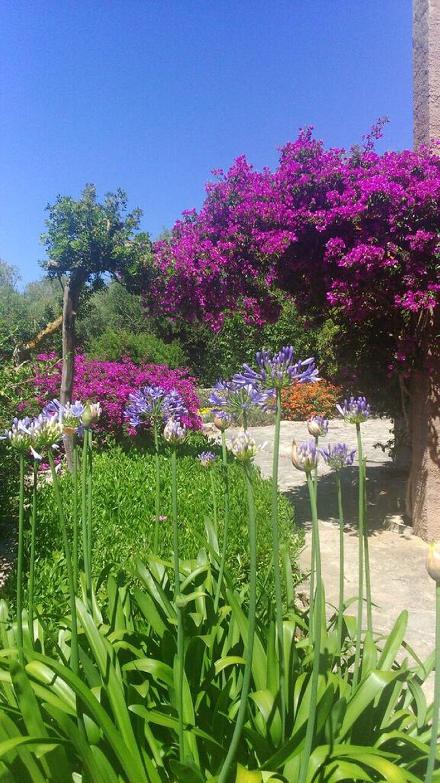 Spanien, Mallorca, Golfvilla mit Pool  - 12